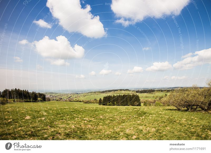 On the Vogelsberg Landscape Sky Clouds Summer Beautiful weather Tree Grass Field Hill Mountain Blue Green Hesse To go for a walk Trip Nature Colour photo