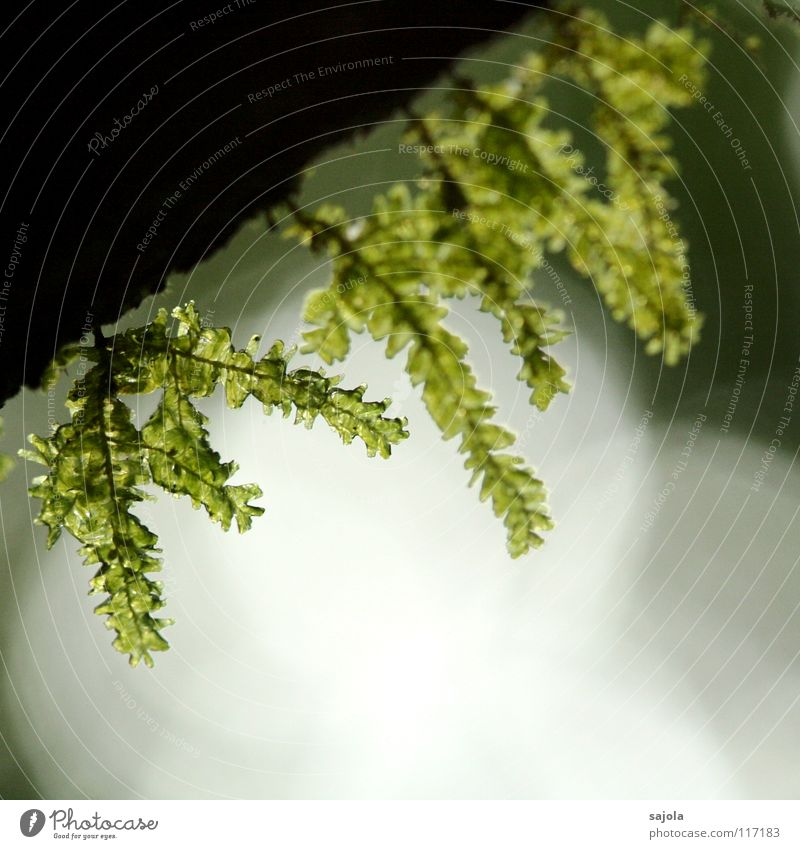 Nature Green Plant Environment Growth Virgin forest Damp Dew Moss Visual spectacle Tree bark Point of light Refraction Flare Borneo Mood lighting