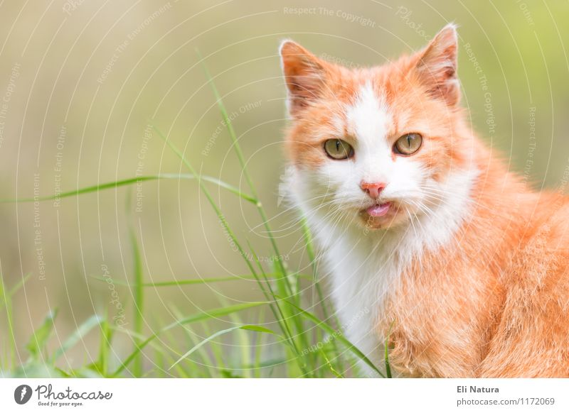 Cat Nature Plant Green Summer White Red Leaf Animal Environment Yellow Spring Meadow Grass Funny Exceptional