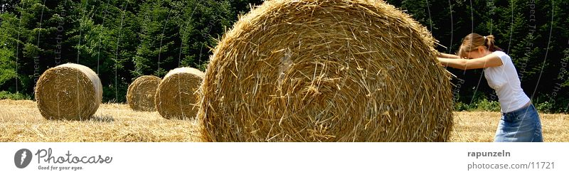 Woman Hay Work and employment Field Agriculture Americas Effort Coil Straw Pushing Hay bale