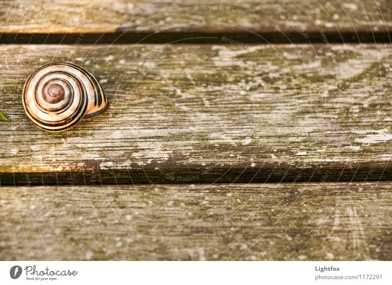 Terribly snazzy Animal Snail 1 Moody Hope Pet Wooden table creep away Withdraw Hide Colour photo Subdued colour Deserted Bird's-eye view