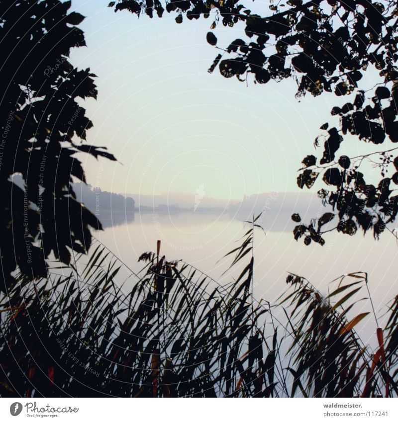 Water Tree Summer Autumn Sadness Lake Fog Romance Common Reed Morning fog