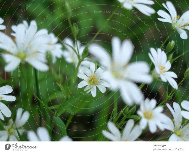 Nature Flower Blossom Spring Fresh Delicate Longing Innocent