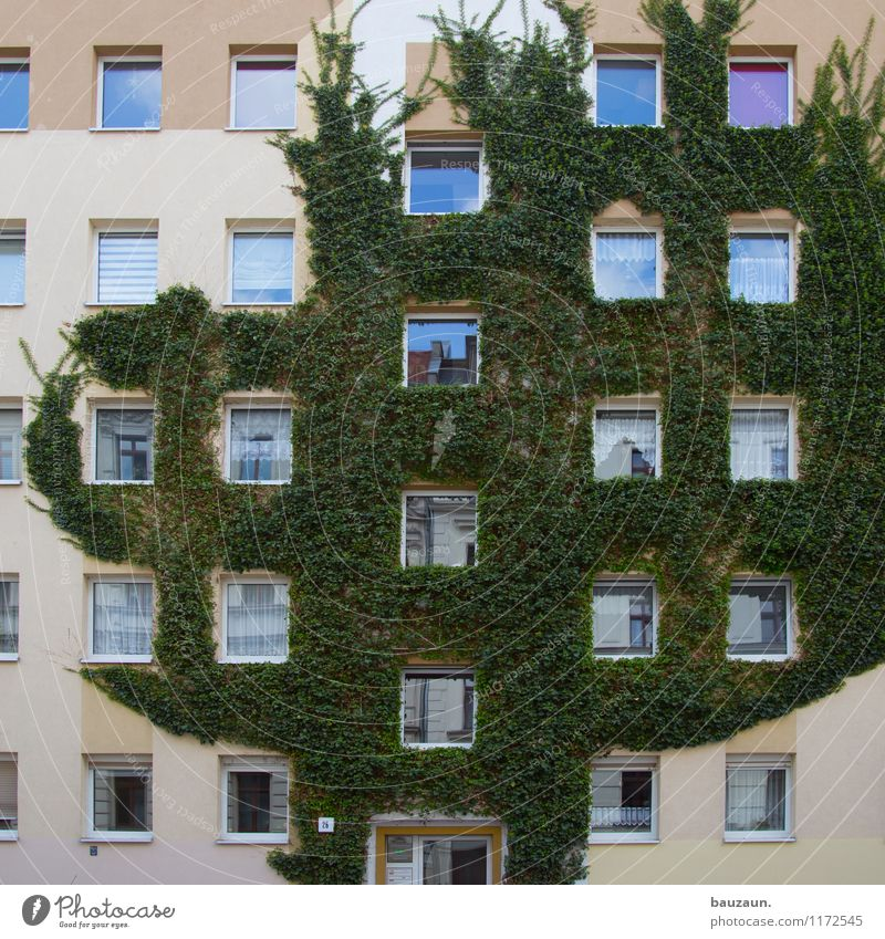 Nature City Plant Green Tree House (Residential Structure) Window Environment Wall (building) Architecture Building Wall (barrier) Facade Flat (apartment)