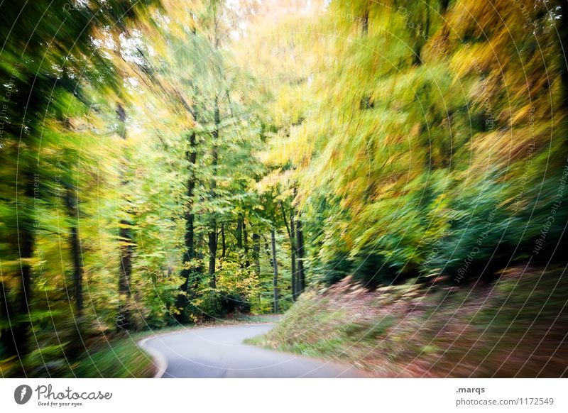leadfoot Trip Nature Landscape Summer Autumn Forest Transport Motoring Street Curve Driving Speed Moody Prompt Stress Movement Threat Perspective Safety Haste