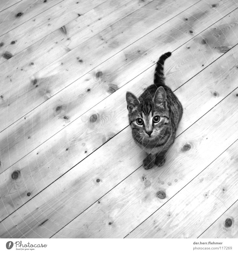 pellet Cat Wood Wooden floor Hello Sweet Knothole Hallway Pet Animal Sausage casing Compassion Domestic cat
