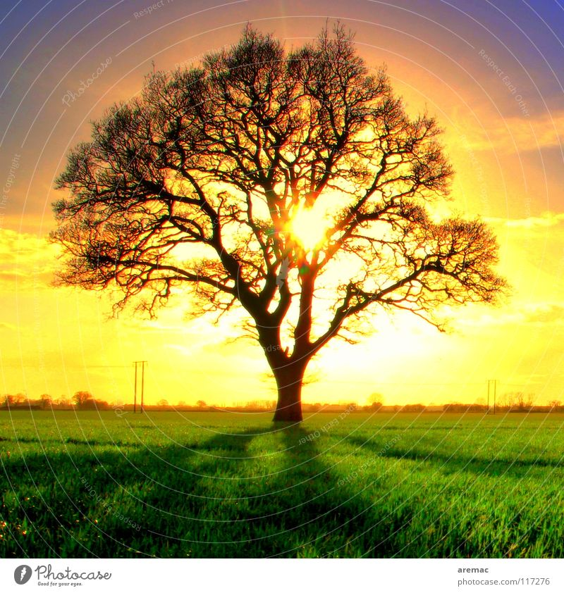 sunbath Tree Back-light Direct Sunset Moody Sunrise Field Green Yellow Exterior shot Brilliant Sunbathing Spring Celestial bodies and the universe Silhouette