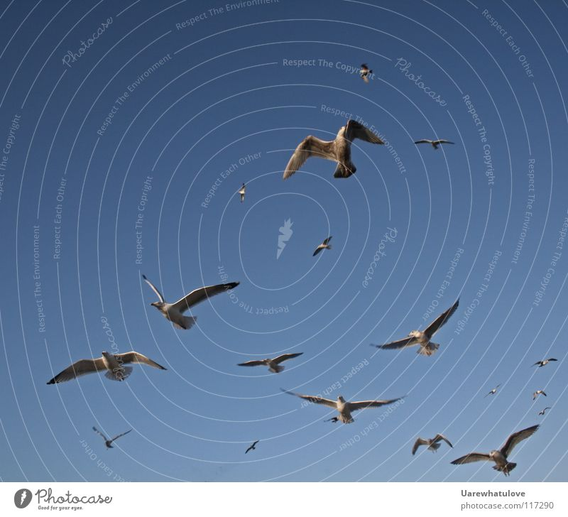 Sky Ocean Blue Beach Above Freedom Together Bird Coast Flying Horizon Aviation Vantage point Wing Hunting Seagull
