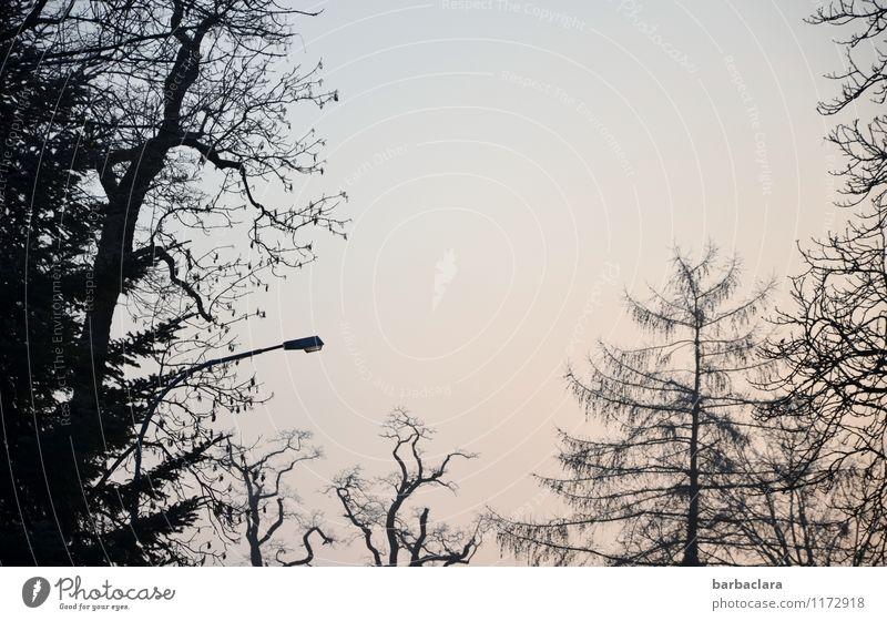 Sky Nature Tree Landscape Calm Dark Environment Lighting Moody Bright Park Street lighting Bizarre