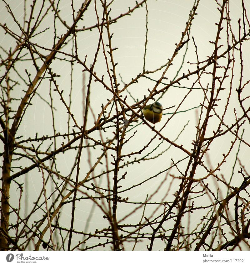 White Blue Winter Leaf Loneliness Yellow Cold Garden Gray Park Bird Search Sit Empty Bushes Branch
