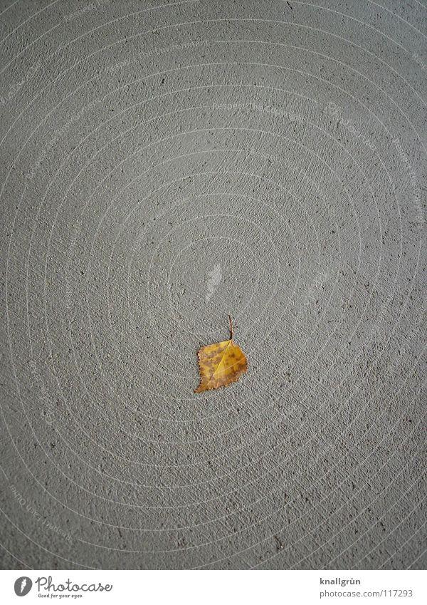 unique piece Autumn Leaf Concrete Gray Brown Loneliness Last Birch leaves Transience left