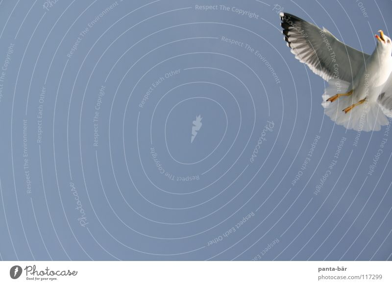 Sky Nature Blue Freedom Air Bird Flying Wild animal Wing Seagull Blue sky Section of image Partially visible Floating Sky blue