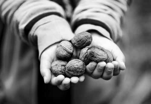 Human being Child Hand Autumn Food Masculine Infancy Fingers To hold on Harvest Indicate Autumnal Nut Accumulate Give 3 - 8 years