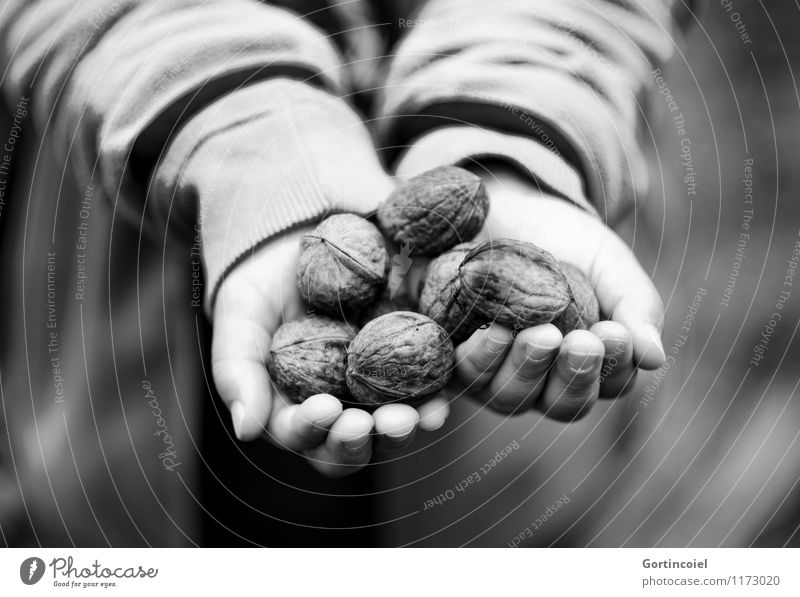 walnut harvest Food Human being Masculine Child Hand Fingers 1 3 - 8 years Infancy Autumn To hold on Give Indicate Walnut Accumulate Harvest Nut Autumnal