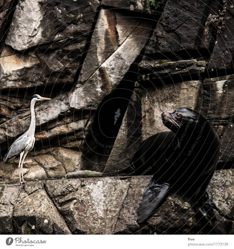 what wotsch? Nature Animal Bird Zoo 2 Together Sea lion Grey heron Looking Claustrophobia Insecure Discover Water Rock Wall (building) Colour photo