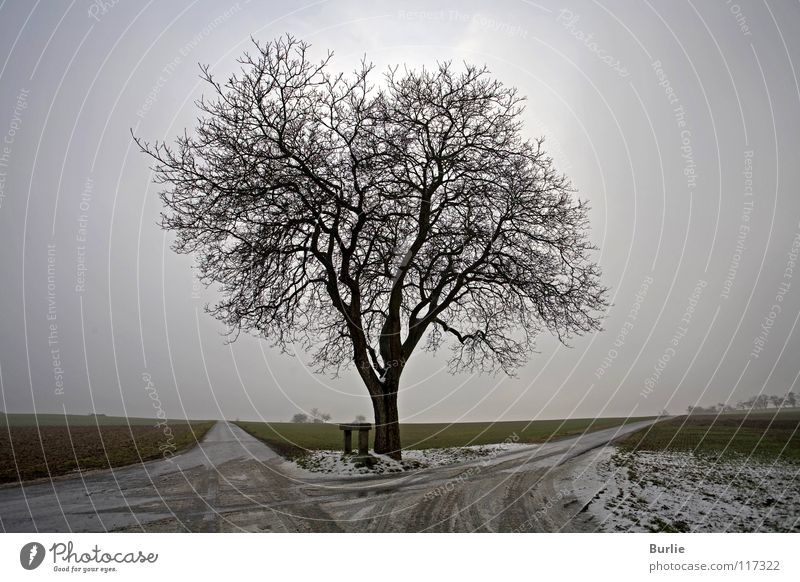 waiting for spring Tree Winter Leafless Junction Loneliness Anticipation Hope Wait Empty
