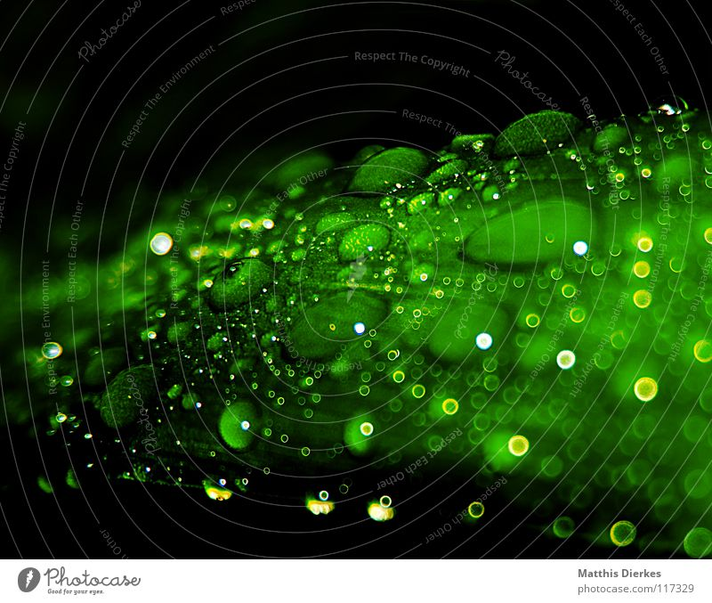 Water Green Beautiful Tree Leaf Yellow Food Lamp Lighting Orange Rain Flying Esthetic Stand Drops of water Bushes