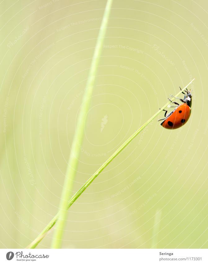 Nature Plant Landscape Leaf Animal Blossom Spring Flying Beetle