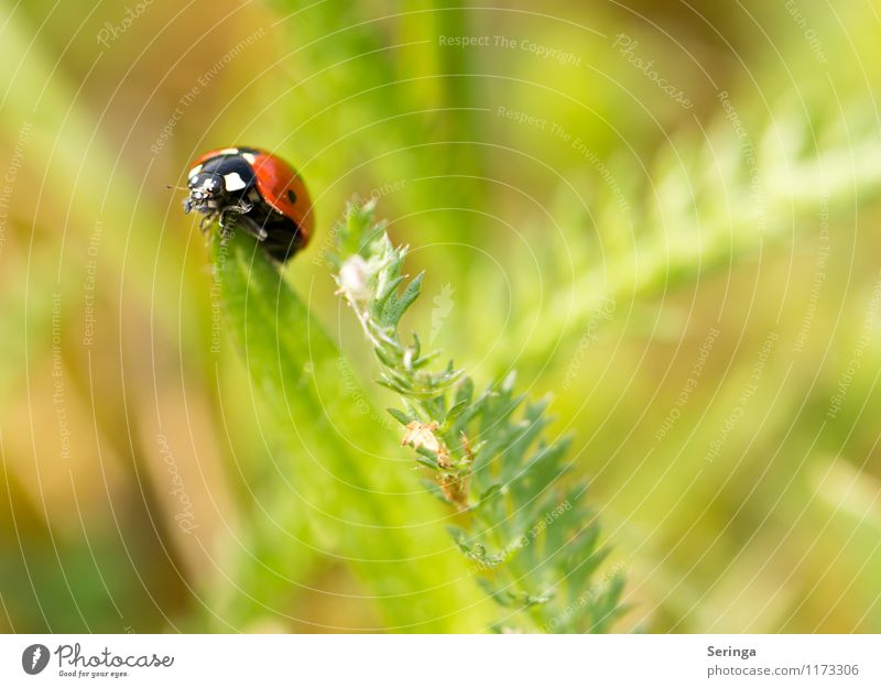 Ladybird 1 Nature Plant Animal Farm animal Beetle Free Red Colour photo Exterior shot Close-up Macro (Extreme close-up) Day Contrast Blur Motion blur