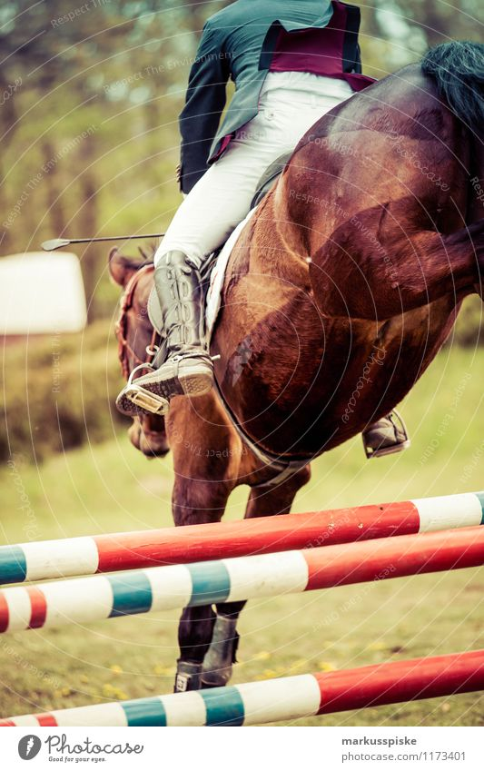 Man Adults Style Jump Leisure and hobbies Elegant Success Walking Esthetic Horse Athletic Barrier Sporting event Handicapped Equestrian sports Show jumping