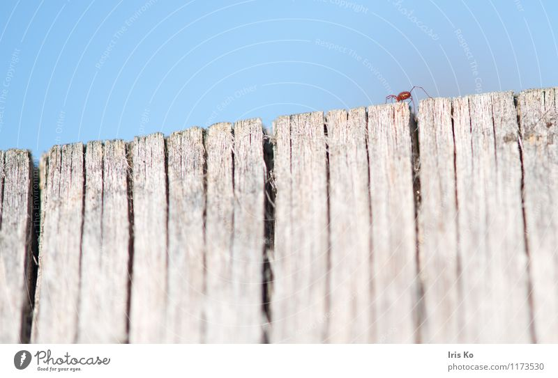 high up Nature Animal Insect 1 Crawl Small Natural Thin Red Fear Fear of heights Movement Mite Articulate animals Colour photo Multicoloured Exterior shot