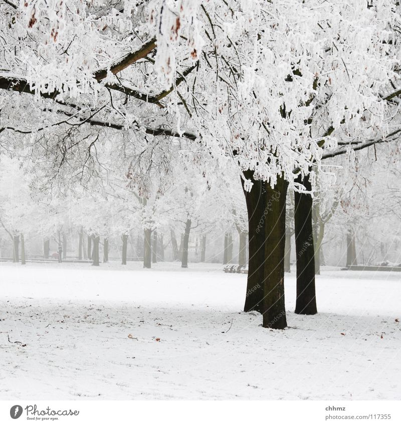 winter in the park Winter White Ice Hoar frost Forest Park Fog Loneliness Tree Horizontal Structures and shapes Flat Cold Unicoloured Frost Smoothness
