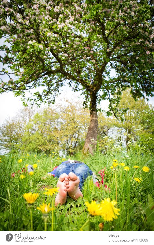 Barefoot woman lies relaxed under a tree in a meadow with spring flowers Senses Relaxation Vacation & Travel Sunbathing Young woman Youth (Young adults) 1