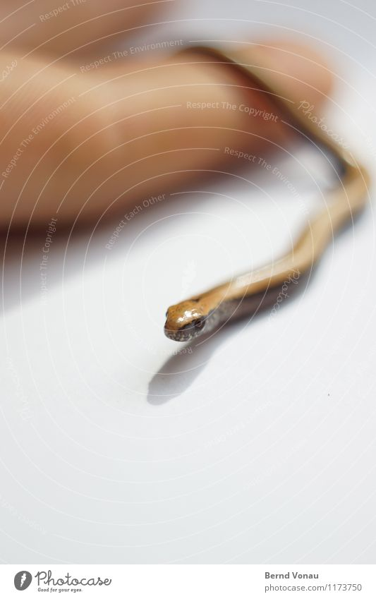 """I """"go"""" now. Beautiful 1 Human being Animal Worm Glittering Brown Green Meandering Slow worm Lizards Reptiles Head Wiggly line Smoothness Fingers Hand Escape"""