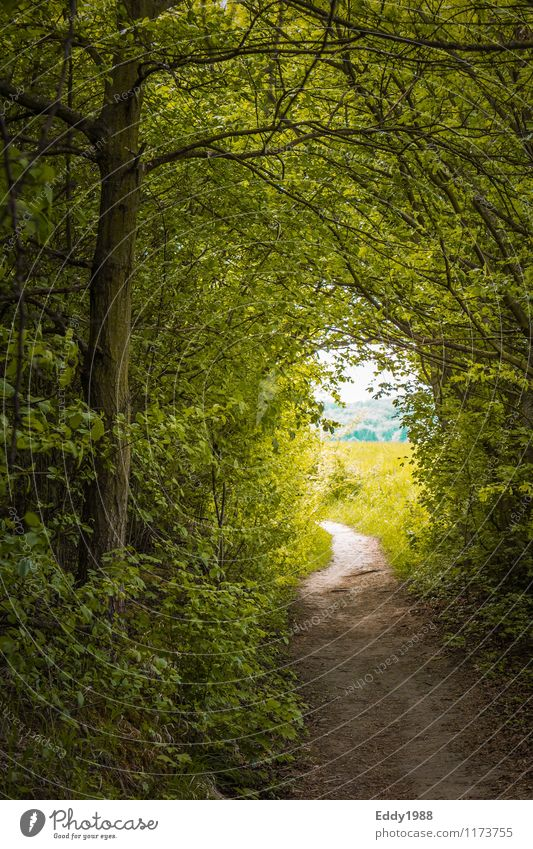 Light at the end of the path Nature Sky Spring Plant Tree Grass Forest Hiking Green Moody Anticipation Optimism Curiosity Adventure Movement Hope