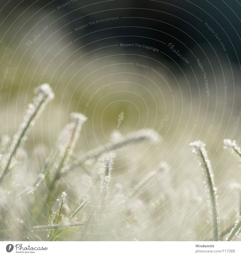 White Green Winter Cold Snow Meadow Grass Bright Ice Glittering Fog Sweet Stand Lawn Blade of grass Vertical