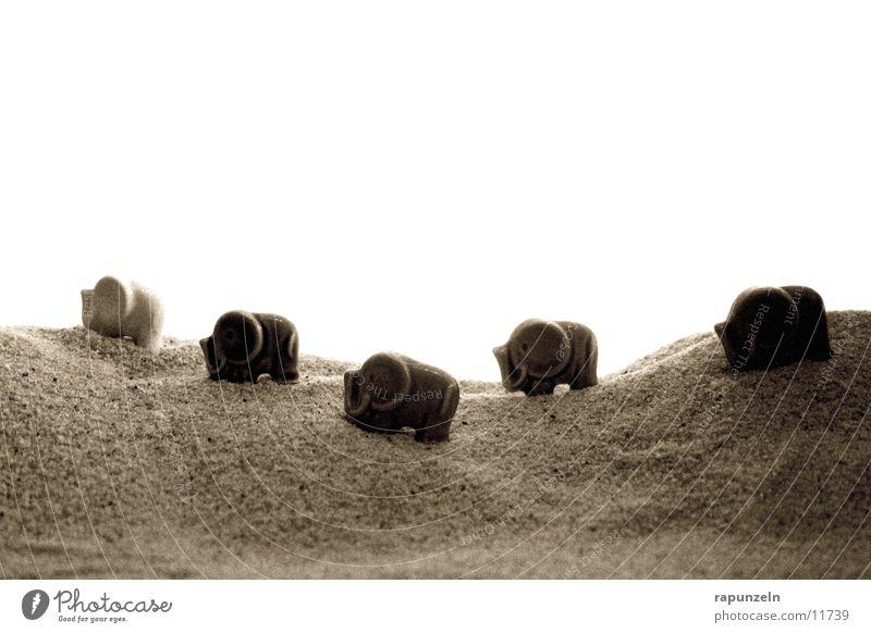 Porcelain elephants on their journey Elephant Hiking Grain porcelain Vacation & Travel Chain Walk Sand Desert gene light