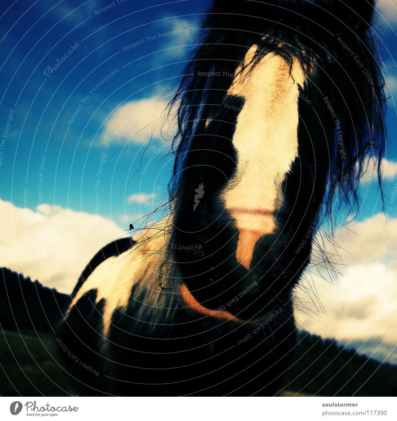 Sky Blue White Green Animal Clouds Black Meadow Hair and hairstyles Funny Nose Happiness Horse Curiosity Fantastic Facial hair