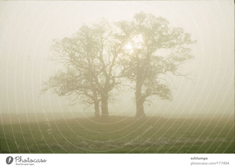 Nature Tree Autumn Meadow Field Fog Mecklenburg-Western Pomerania