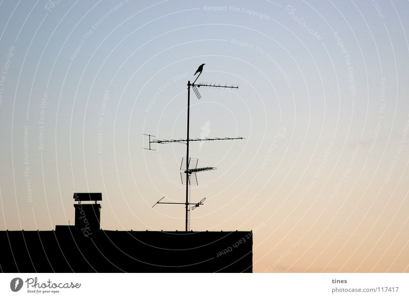 Good reception Bird Raven birds Electricity House (Residential Structure) Roof Morning Antenna Vantage point Television Dawn Dusk Shadow Tower Welcome
