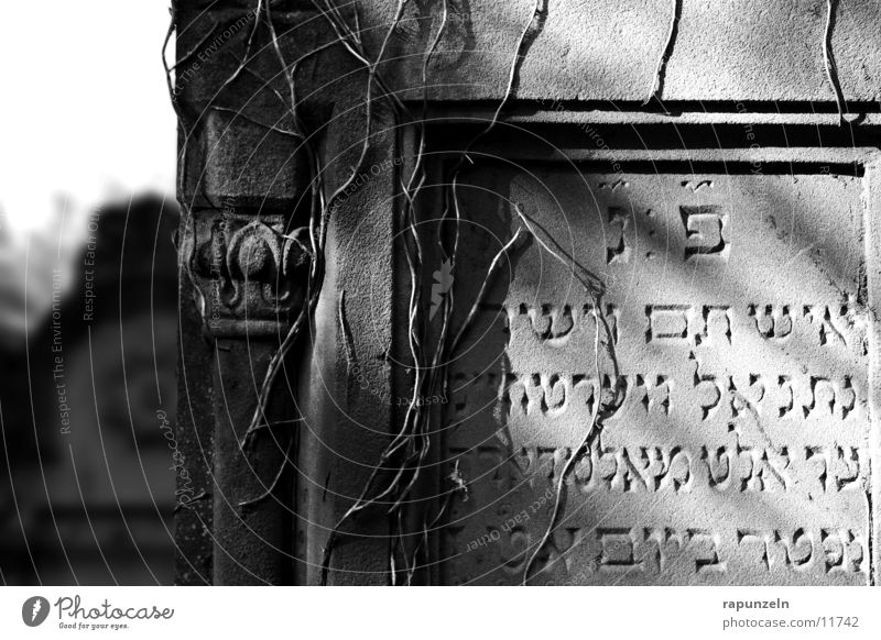 Sun Stone Decoration Historic Cemetery Overgrown Grave Tombstone Judaism Inscription Religion and faith