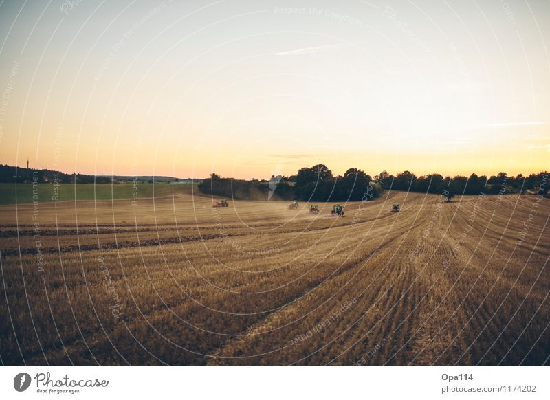 "field day Environment Nature Landscape Plant Animal Sunrise Sunset Summer Agricultural crop Field Work and employment ""Tractor Tractors Agriculture"