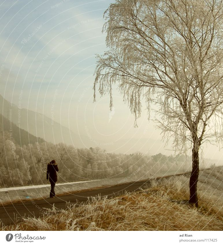 where the streets have no name Relaxation Calm To go for a walk Winter Woman Adults 1 Human being Nature Sunlight Fog Ice Frost Snow Drought Tree Meadow River