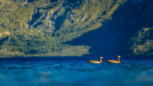 Floating ducks Fishing (Angle) Hunting Vacation & Travel Tourism Trip Adventure Summer Summer vacation Environment Nature Landscape Beautiful weather Forest