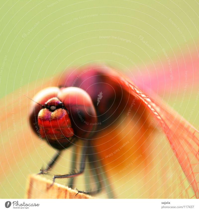 Nature Animal Environment Eyes Head Legs Pink Wild animal Sit Wait Esthetic Wing Protection To hold on Animal face Asia