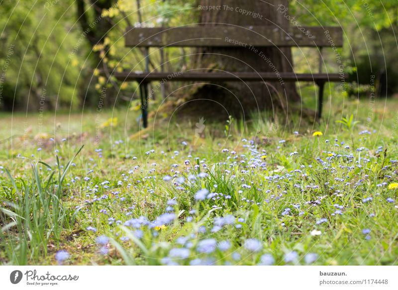 forget-me-nots. Harmonious Well-being Contentment Senses Relaxation Calm Environment Nature Landscape Plant Earth Spring Summer Weather Tree Grass Blossom