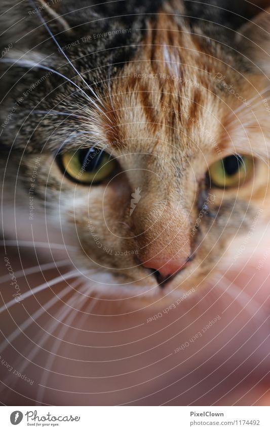 Cat Animal Garden Brown Friendship Sit Cute Warm-heartedness Curiosity Loyal