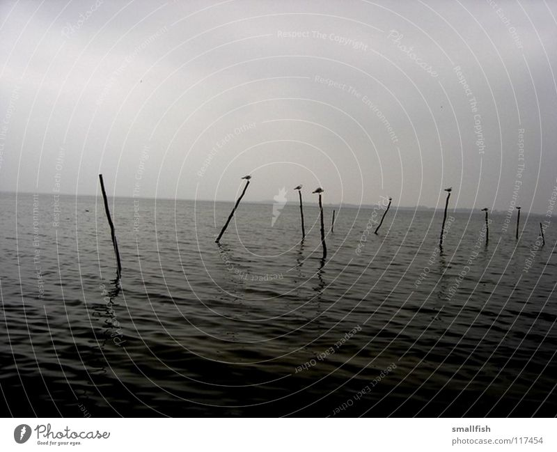 posts Ocean Bird Dark Eerie Grief Loneliness Navigation Sky Denmark Pole