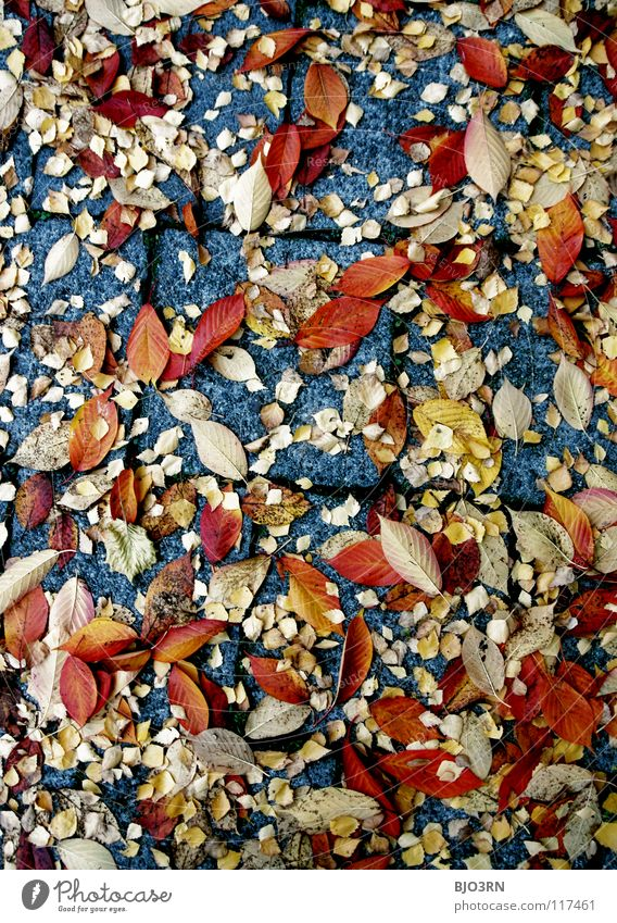 Nature Blue Red Leaf Calm Yellow Autumn Gray Stone Orange Multiple Break Floor covering Many To fall Asphalt