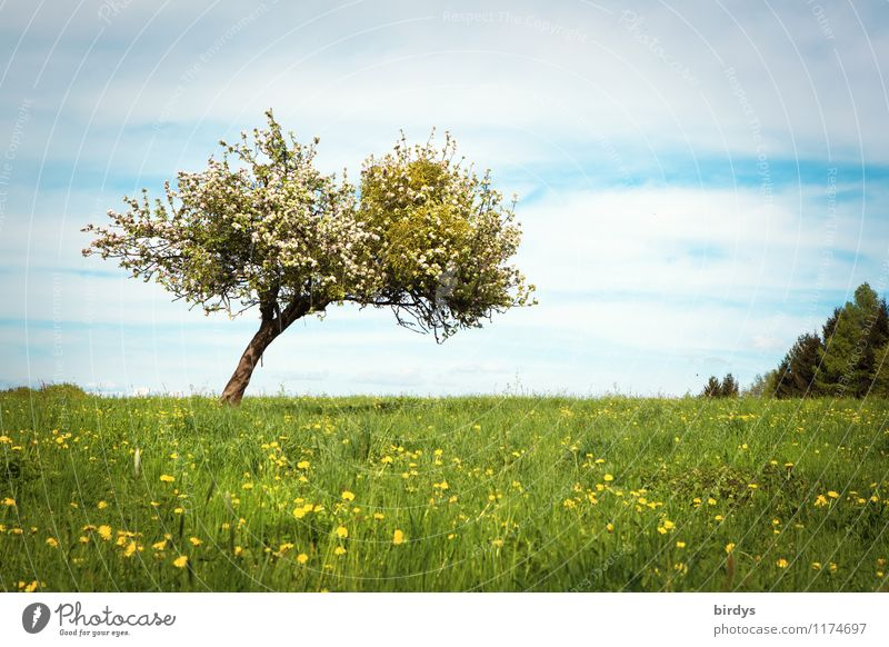 Sky Nature Summer Tree Landscape Calm Clouds Spring Blossom Meadow Horizon Growth Fresh Esthetic Blossoming Beautiful weather