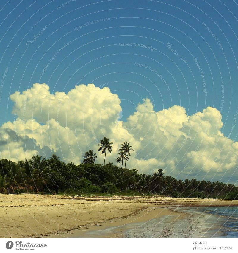 Water Sky White Ocean Blue Joy Beach Vacation & Travel Clouds Relaxation Sand Africa Palm tree Storm Algae Cumulus