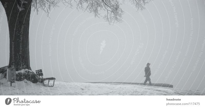 Man White Tree Winter Calm Loneliness Cold Snow Hiking Fog Transport Places Gloomy Frost Bench Branch