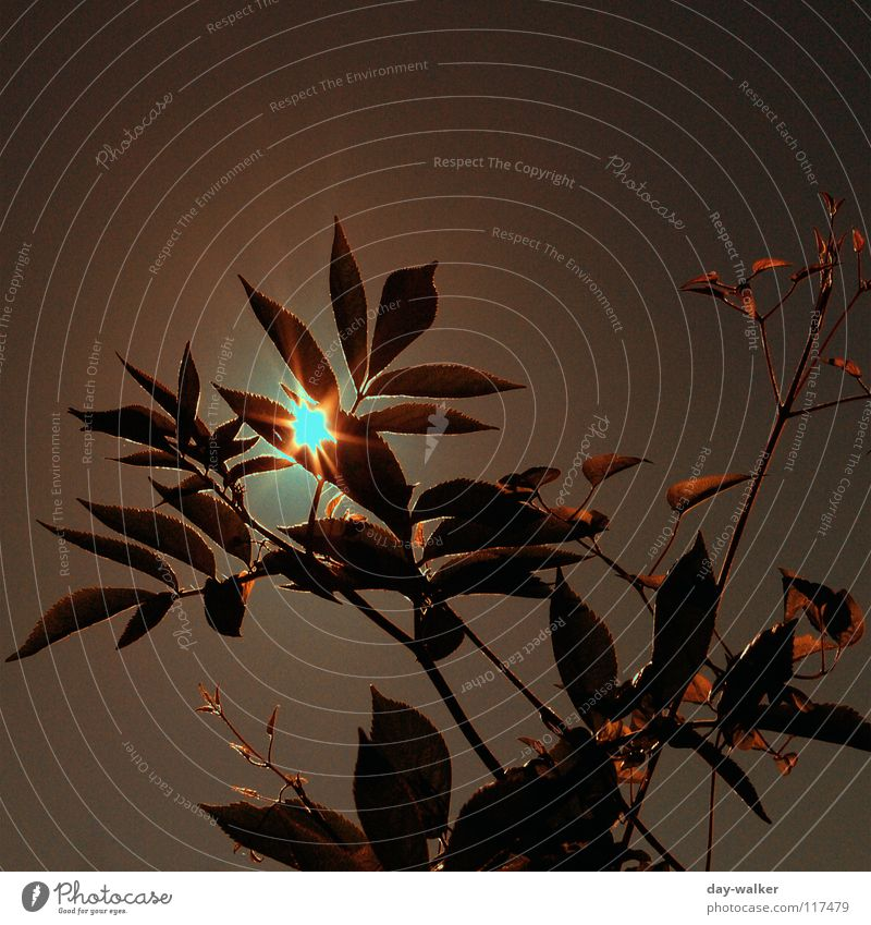Summerfeelings iV Moody Character Relaxation Leaf Red Brown Back-light Lighting Glimmer Dazzle Yellow Sun Nature Freedom Warmth Plant