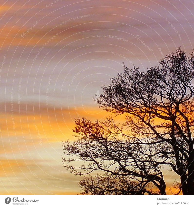 Nature Sky White Tree Blue Red Winter Black Clouds Yellow Moody Orange Violet Branch Treetop Twig