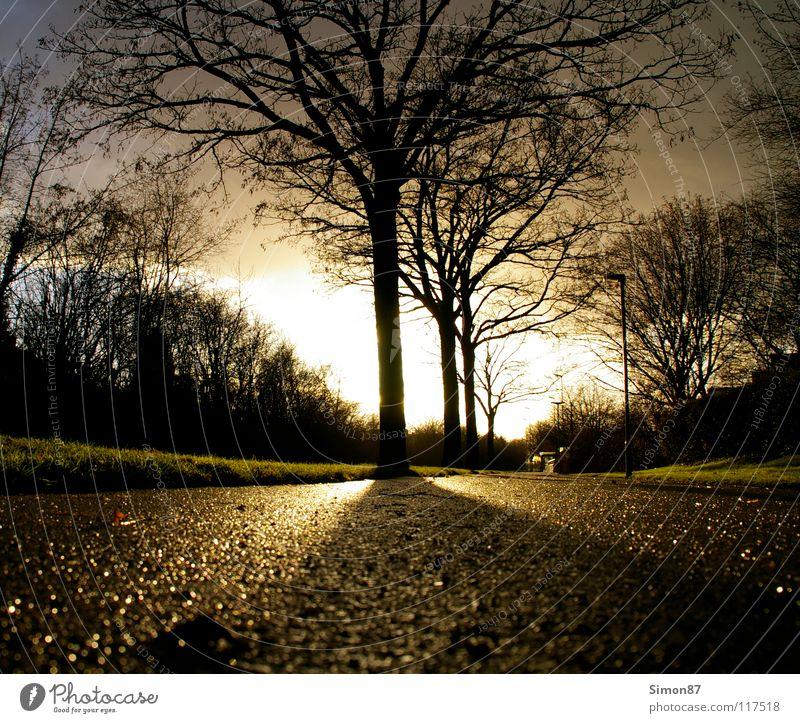 tree of enlightenment Tree Twilight Sidewalk Light Clouds Winter's day Sun Contrast Street Sky Landscape