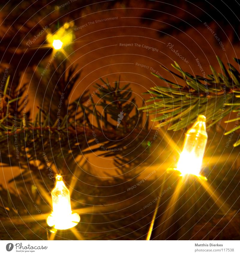 light chain Light Fairy lights Christmas & Advent Christmas tree Beautiful Glittering Intoxicant Fir needle Electric bulb Branched Long exposure Foreground 3